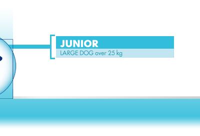 junior large dog over 25 kg