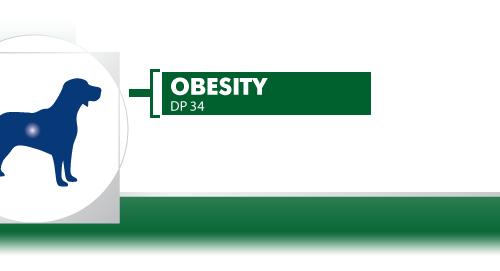 Obesity-Management-DP-34
