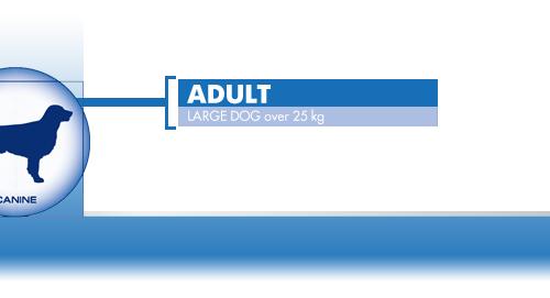 Adult-Large-Dog