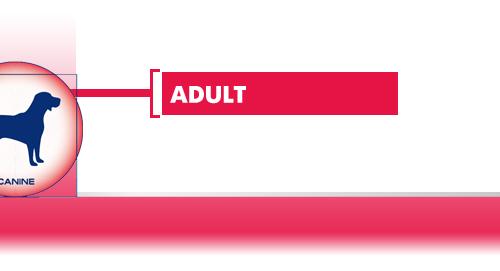 Adult-Medium-Dog