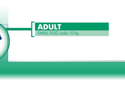 Adult-Small-Dog