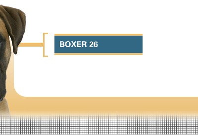 Boxer-26-Adult