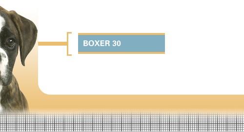 Boxer-30-Junior
