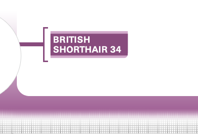 British-Shorthair-34