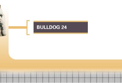 Bulldog-24-Adult
