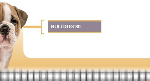 Bulldog-30-Junior