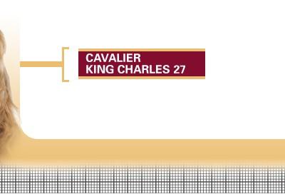 Cavalier-King-Charles-27