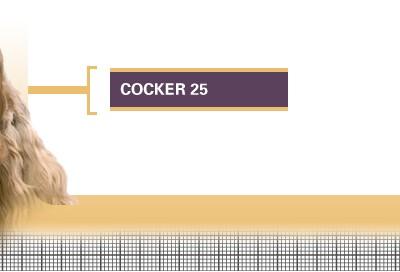 Cocker-25