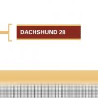 Dachshund-28-Adult