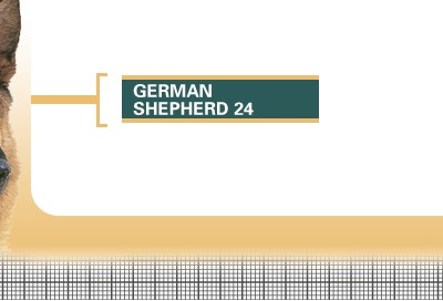 German-Shepherd-24-Adult