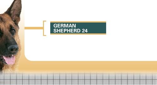 German-Shepherd-24-Adult