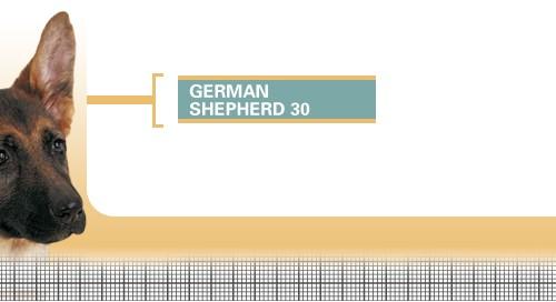 German-Shepherd-30-Junior