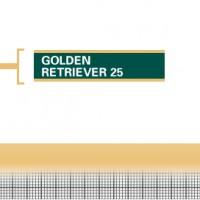 Golden-Retriever-25-Adult