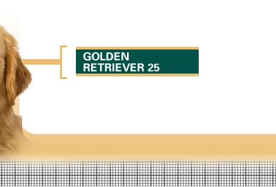 Golden-Retriever-25-Adult