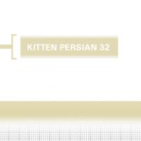 Kitten-Persian-32