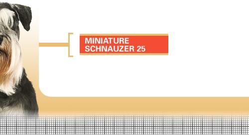 Miniature-Schnauzer-25