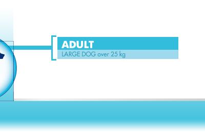 Neutered-Adult-Large-Dog