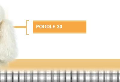 Poodle-30