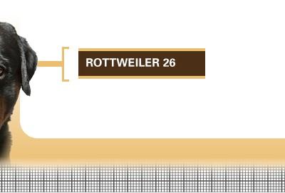 Rottweiler-26