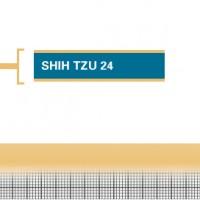 Shih-Tzu-24-Adult
