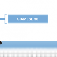 Siamese-38