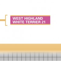 West-Highland-White-Terrier-21