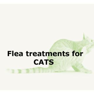 Flea Treatments for Cats