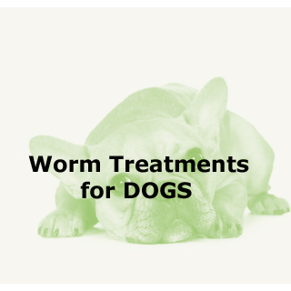 Worm Treatments for Dogs