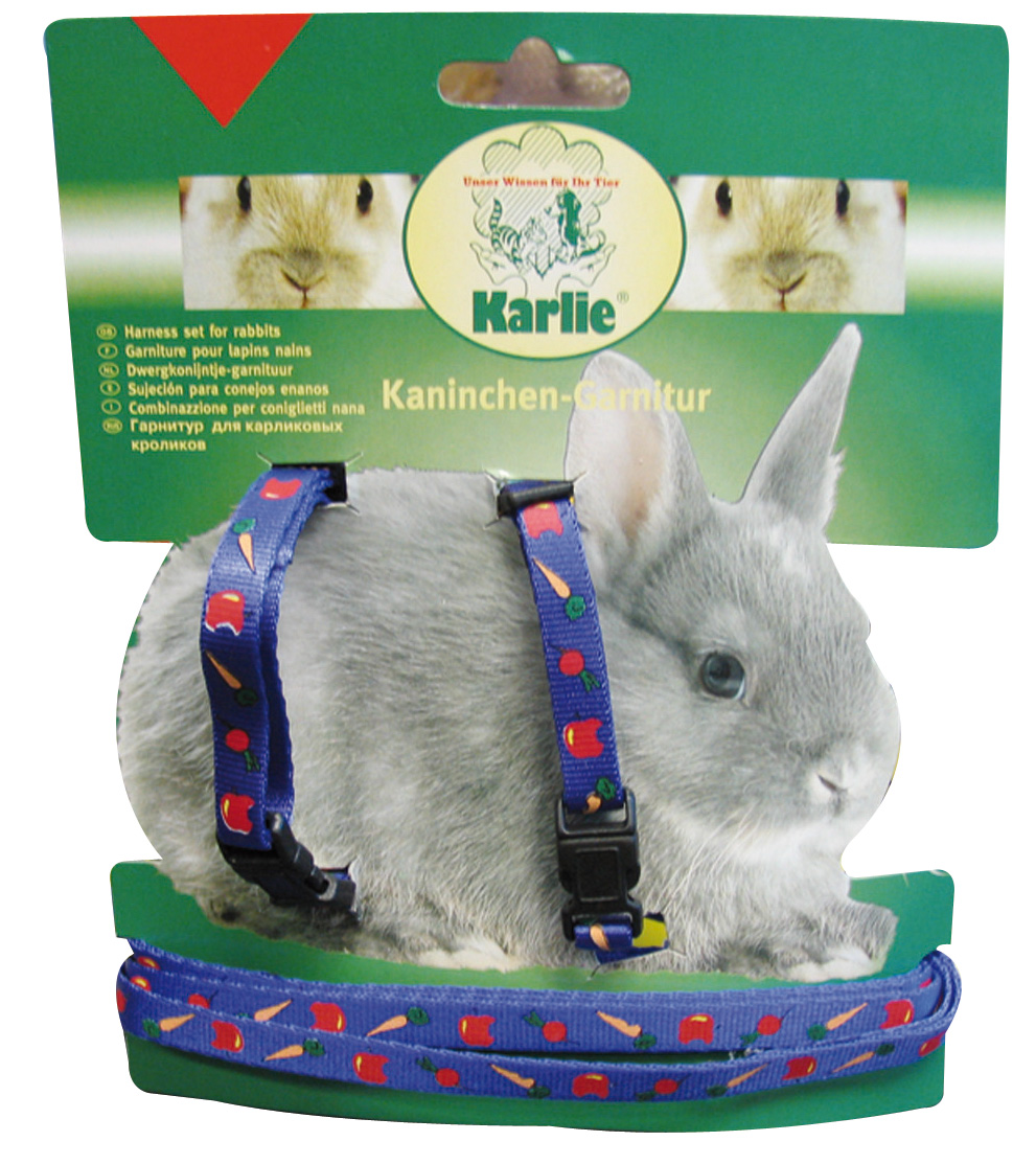 Rabbit Agility  About Harnesses