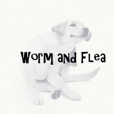 FLEA & WORM PRODUCTS
