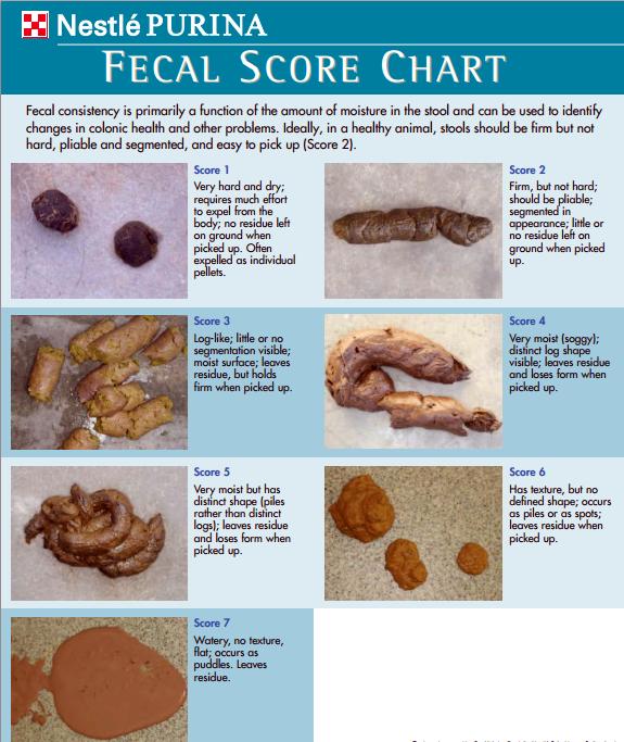 fecal-chart