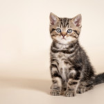 teach-cat-sit-kitten